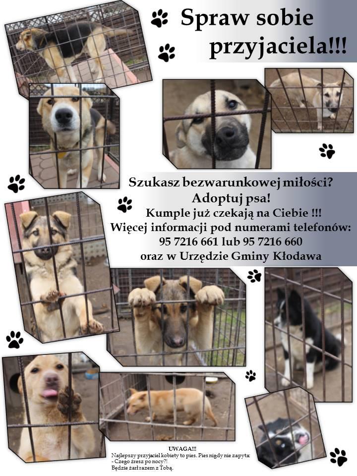 - 2016-03-15_adoptuj_psa.jpg